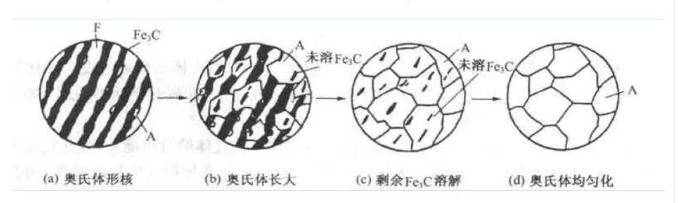 奥氏体形变过程